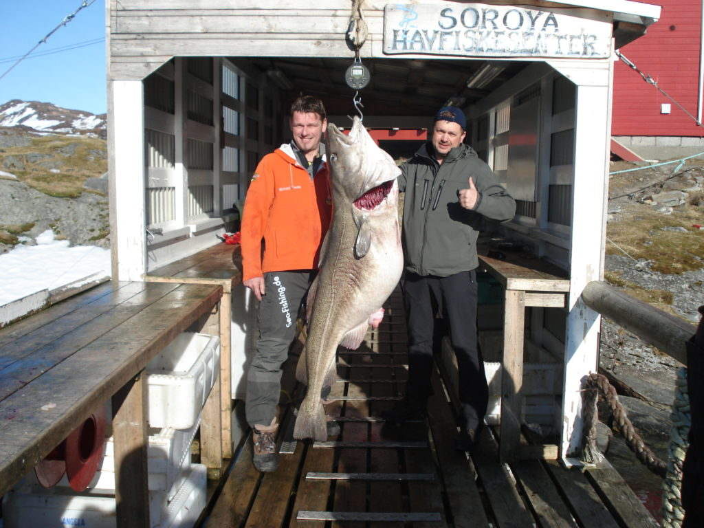 Michael Eisele (Tyskland) med fangsten på 47 kg. En abnorm torsk - Foto Sørøya Havfiskesenter