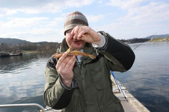En noe uventet fangst og ny art på Jonas. Fløyfisk på 68g. Foto: Jon Kolstad