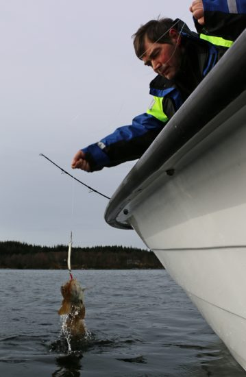 Torskefiske 1