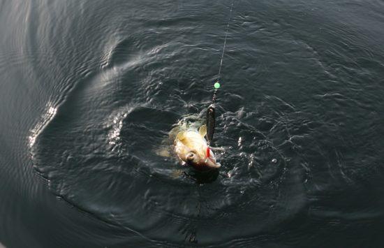 Torskefiske 3