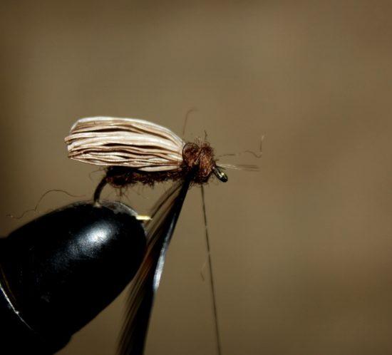 Dubb bindetråden med mer brun dubbing, og form en fin fremkropp ved å surre dubbingtråden foran vingen, mellom vingen og hackelfjæra og mellom hackelfjæra og krokøyet. Spar litt plass til avslutning. Foto: Lasse Bøe