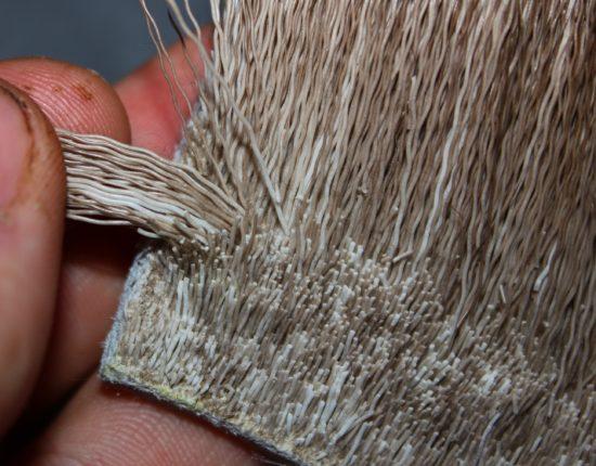 Plukk ut en passe klump elghår, og klipp av. Mengdemål kommer etter trening, prøving og feiling. Foto: Lasse Bøe
