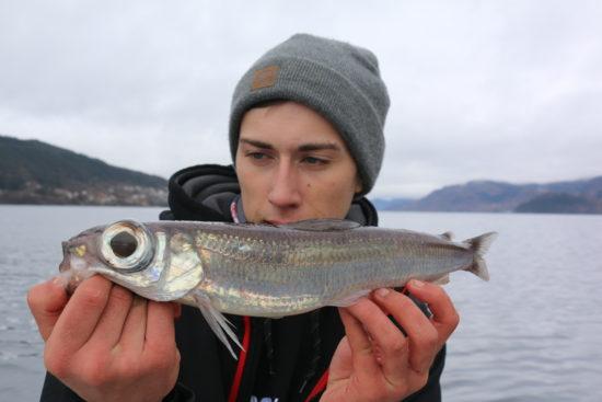 Fjordguiding (11)