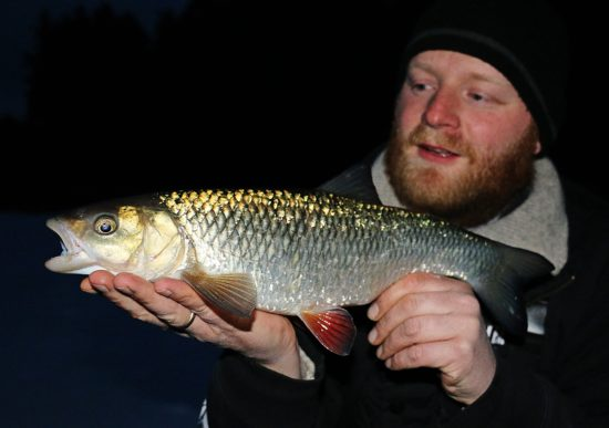 Feederfiske i Glomma (2)