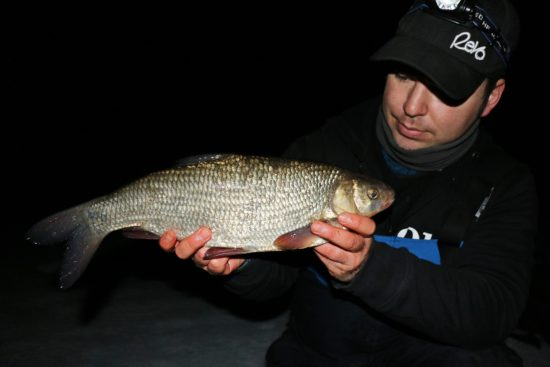 Feederfiske i Glomma (6)