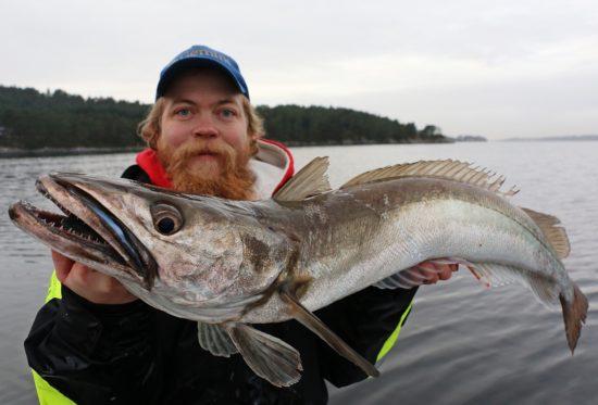 lysingfiske-3