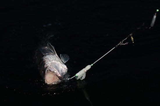 lysingfiske-7