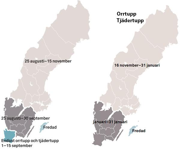 Skogsfugljakt  - Jakttid skogsfugl Sverige