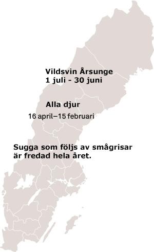 Jakttider villsvin Sverige